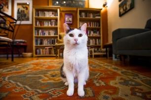 Denver Cat Co. images for promotional use.